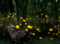 Catching Fireflies: Rogue Applications and Your IT Environment